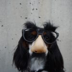 a funny dog with human nose and glasses